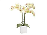 Orchid Triple Stem Modern Accessory
